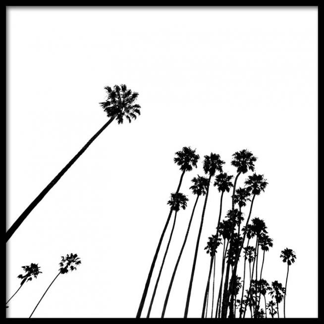 venice beach palm trees no2 poster