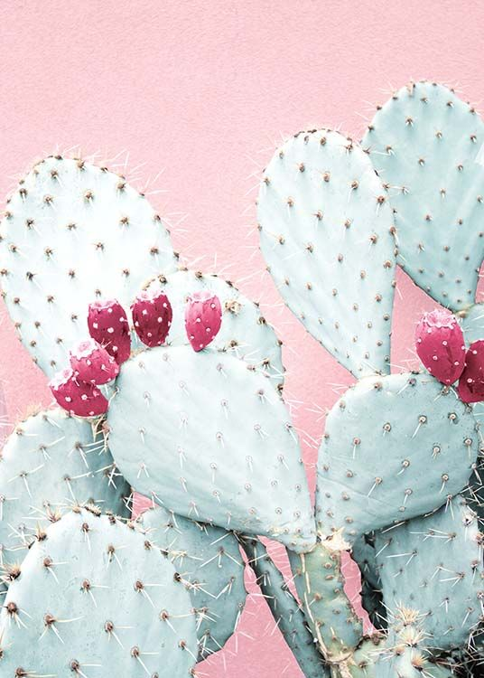 Pastel Cactus No2 Poster / Photography at Desenio AB (3791)