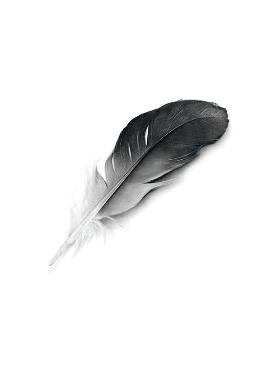 Black Feather, Posters / Black & white at Desenio AB (7357)