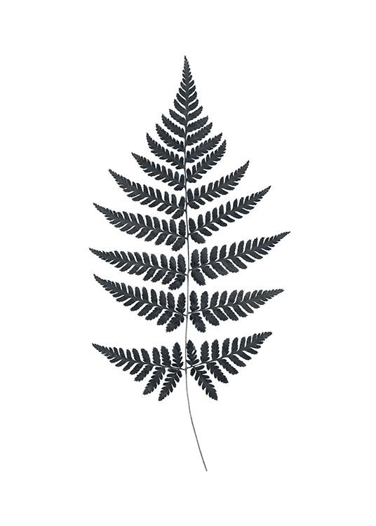 Fern, Posters / Botanical at Desenio AB (7538)