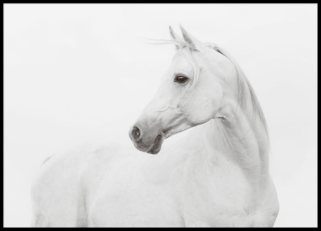 Pictures Of Horses To Print Poster with photographs of a white horse