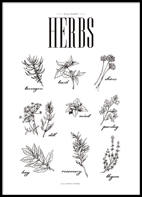 Print for the kitchen with herbs kitchen posters online