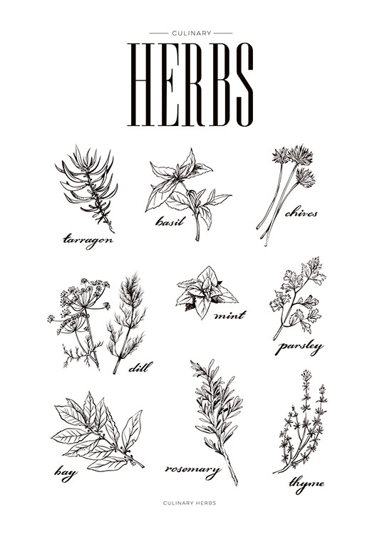 Stylish poster for kitchen | Kitchen art with herbs | Prints online