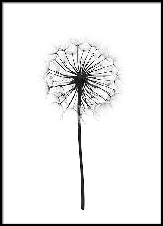 Plant posters and prints in black and white with photography