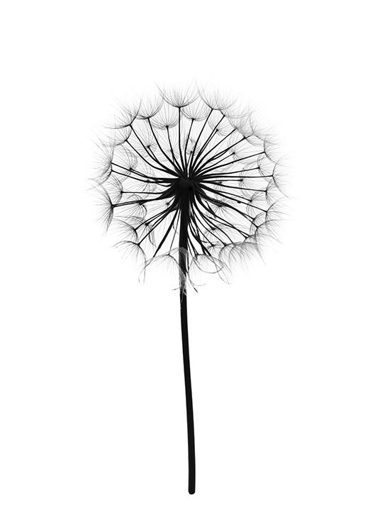 botanical poster poster with photograph of a dandelion prints online