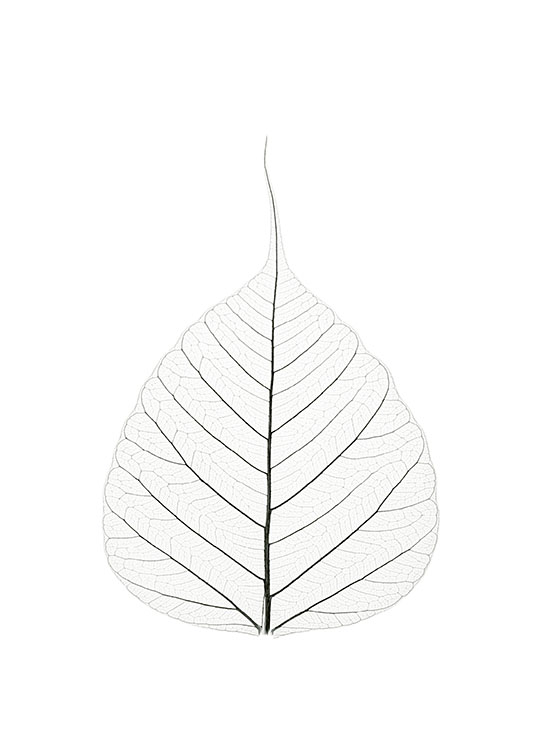 Skeleton Leaf, Poster / Black & white at Desenio AB (7909)