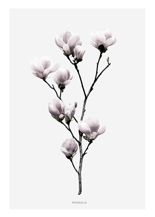 cleanly designed poster with magnolia poster with photo art