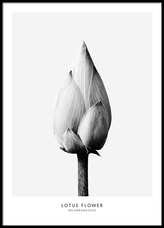 Botanical black and white poster with photo of a flower botanical prints and black and white photo art minimalist interior design mightylinksfo