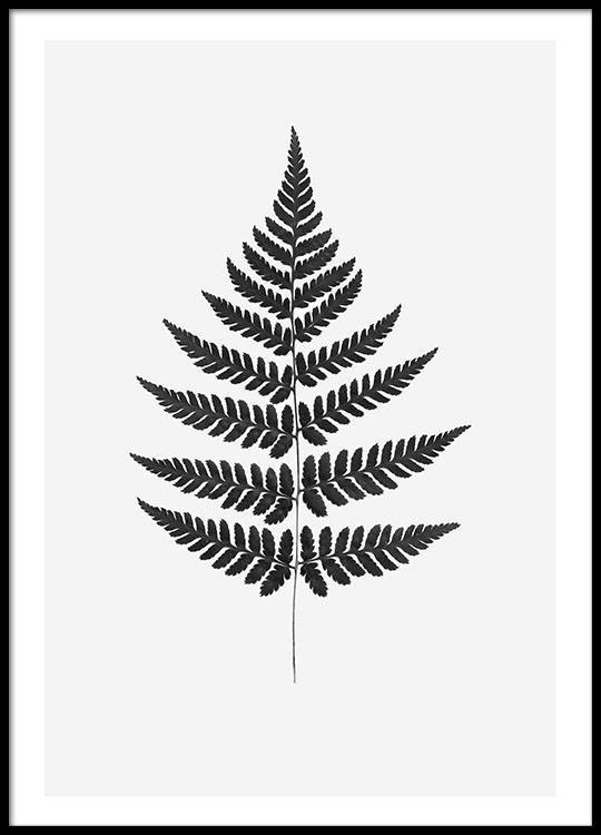Posters for stylish interior design botanical prints of fern - Laminas y posters madrid ...
