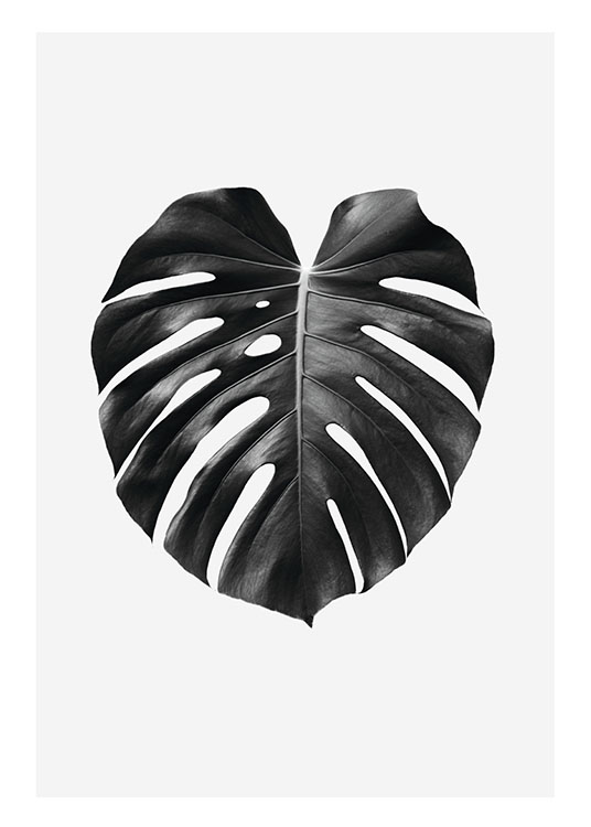black and white posters botanical prints for fashionable. Black Bedroom Furniture Sets. Home Design Ideas