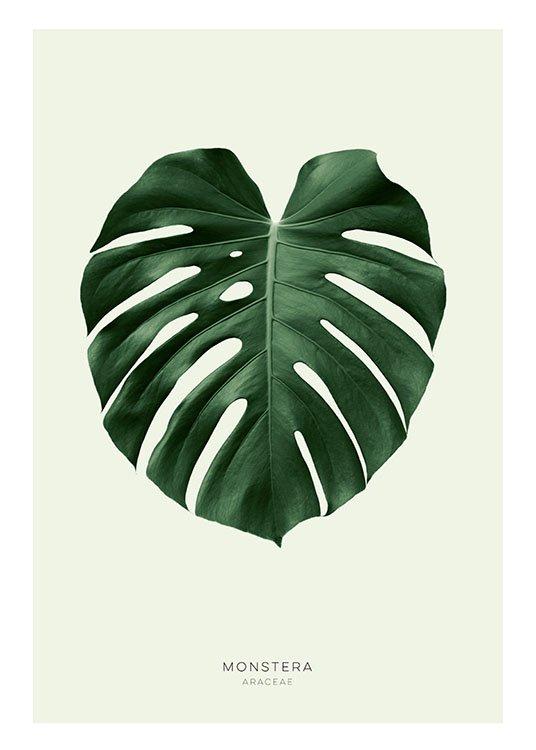 botanical posters poster of a green monstera leaf. Black Bedroom Furniture Sets. Home Design Ideas