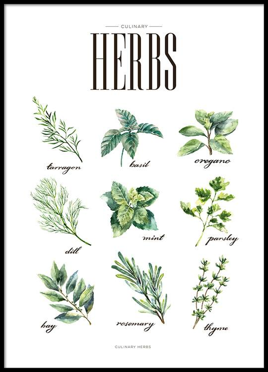 Poster With Kitchen Art, Herbs | Kitchen Prints Online