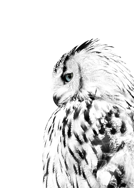 – Photograph of an owl from the side with black and white feathers and blue eyes
