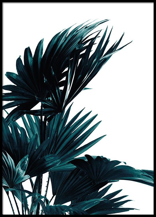 poster with palm leaves botanical photos desenio