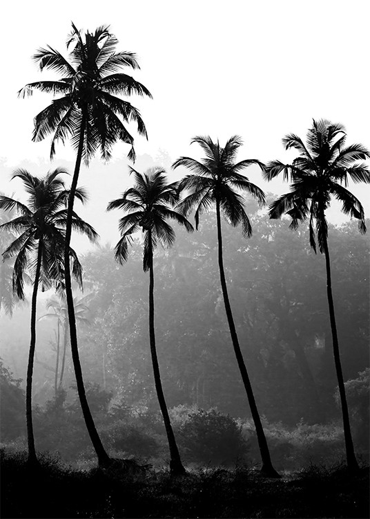 – Black and white photograph of a bunch of tall palm trees with a rainforest in the background
