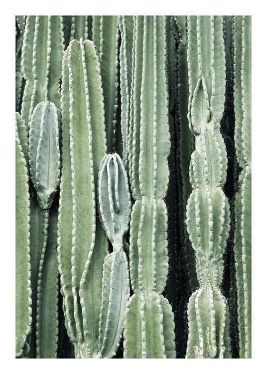Cactus, Posters / Photography at Desenio AB (8539)