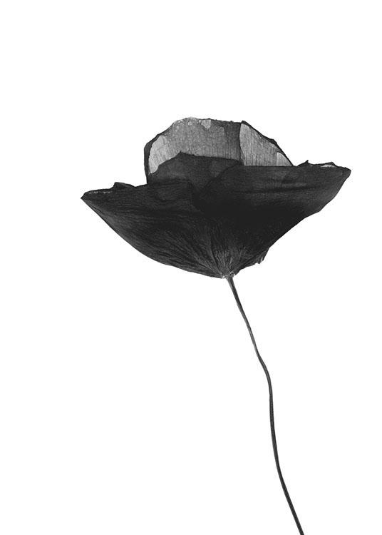 Black poppy flower poster mightylinksfo