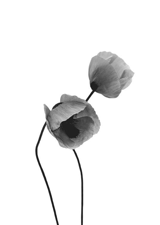 Grey poppy flowers poster mightylinksfo