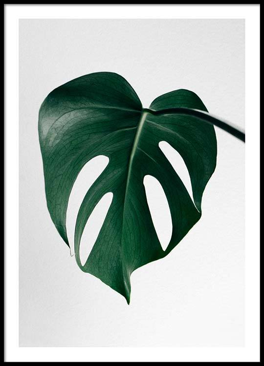 monstera one poster. Black Bedroom Furniture Sets. Home Design Ideas