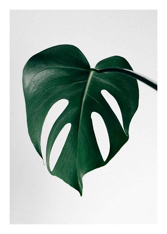 Monstera One Poster / Monsteras at Desenio AB (8720)