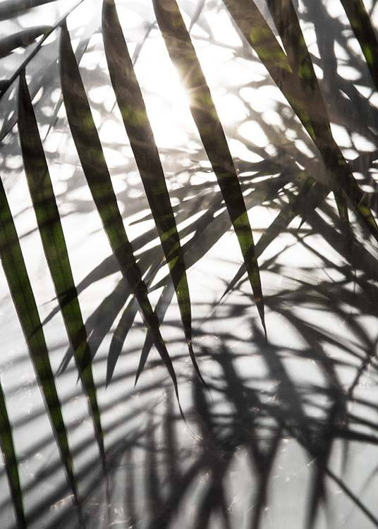 Palm Leaves Sunlight Poster / Photography at Desenio AB (8851)