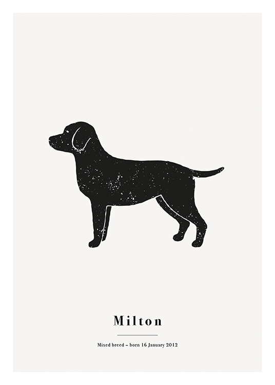 – Black labrador with white spots against a light grey background and text at the bottom